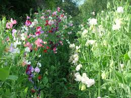 choosing a plot for your cutting patch wild acre