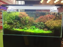 Aquascapes Game Play Online 354 Best Aquascapes Images On Pinterest Aquascaping Aquarium