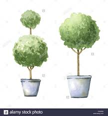 decorative trees in pots watercolor illustrations stock photo