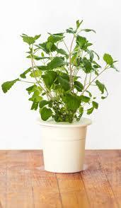 the smart garden 52 best click u0026 grow images on pinterest houses nordic design