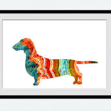 dachshund poster short haired dachshund from colorfulprint on
