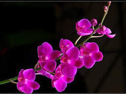 beautiful flowers wallpaper free download on wallpaperget com