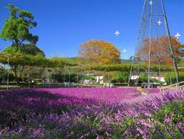 ファイル ashikaga flower park flower stage in late autumn 2 jpg