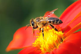 neonicotinoid pesticides are slowly killing bees pbs newshour