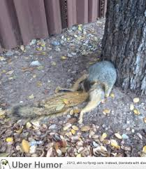 Squirrel Nuts Meme - just a squirrel trying to bust a nut guys nothing new funny