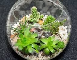 Plants For Desk