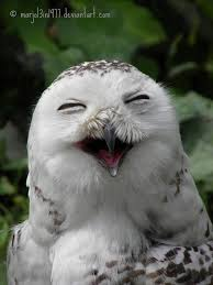 White Owl Meme - laughing owl picture was taken at the dutch zoo called blijdorp
