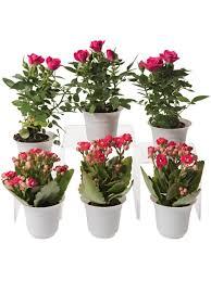 how to plant a terrarium glass terrariums terrarium plants