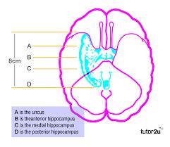 ib psychology bloa cognitions emotions u0026 u2026 tutor2u psychology