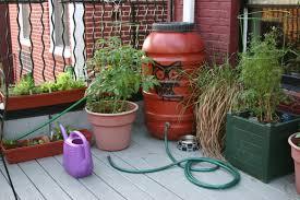 a green light for using rain barrel water on garden edibles