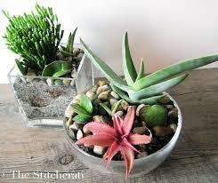 best 25 indoor succulent planter ideas on pinterest indoor