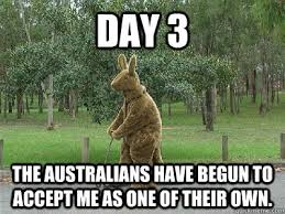 Funny Australia Day Memes - 15 very funny kangaroo pictures