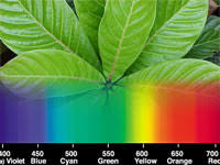 what color light do plants grow best in light color affecting plant growth science project what color