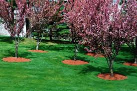 How To Mulch Flower Beds Mulch Choosing The Right Mulch For Your Garden Flowerbeds