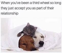 Third Wheel Meme - third wheel cat dog funny animal meme funny pictures lol pics