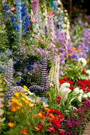 89 best gardening images on pinterest plants flowers and gardening