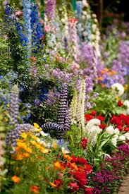 26 best english garden images on pinterest dream garden flowers