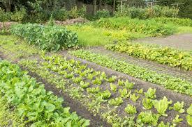crop rotation u2013 the four year crop rotation plan