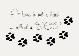 aliexpress com buy pet shop vinyl wall decal dog quote paw