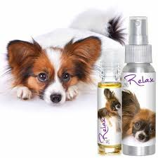 shop papillon collection for your s skin coat care needs