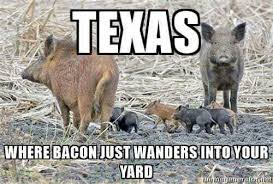 Hog Hunting Memes - texas wildwood hog hunts home facebook