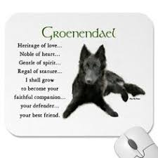 belgian malinois quotes groenendael belgian shepherd dog wikipedia the free