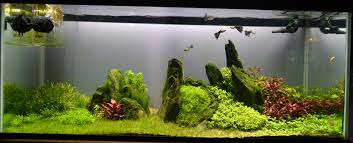 Tank Aquascape The Planted Tank Forum View Single Post 75 Gallon Tank