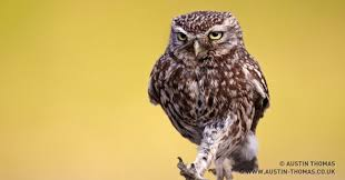 Art School Owl Meme - 100 greatest owl pictures you ll ever see