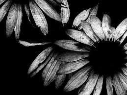 Black And White Photography 343158 500x375px Black And White Photography 18 12 2015