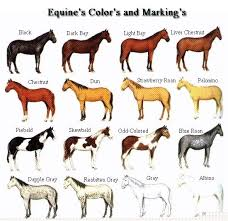 free horse pictures to color coat colors and markings of the