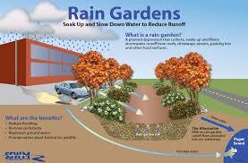 sound native plants 12 000 rain gardens reducing stormwater pollution in puget sound