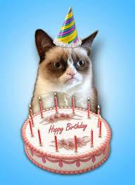 Grumpy Cat Birthday Memes - cat birthday clipart