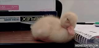 Sleepy Memes - sleepy duck by likeaboss meme center