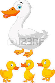 duck images u0026 stock pictures royalty free duck photos stock