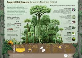 Tropical Rainforest Plant List - human impacts tropical rainforest biome