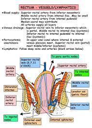 Female Abdominal Anatomy Pictures 149 Best Human Viscera Anatomy Images On Pinterest Anatomy