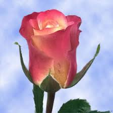 Flower Companies Flower Companies Mustard Earth Tones With Red Edges Roses Global