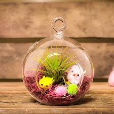 air plant easter gift with glass globe terrarium kit hinterland