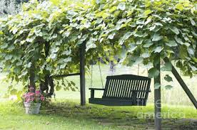 build grape trellis how to make wine in your backyard winemaking beginners