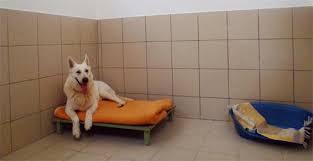 chambre pour chien accueil le centre canin et felin jorel vous accueillle à