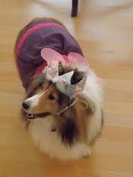 Sheep Dog Costume Halloween Sheltie Costume Sheltie Sheltie