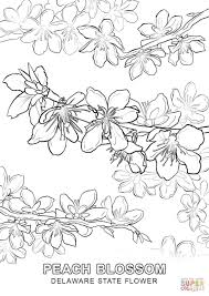 delaware state flower coloring page free printable coloring pages