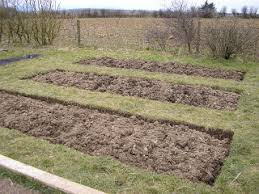 how to plan crop rotation in a vegetable gardengreenside up
