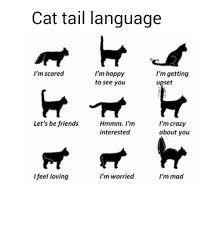 Im Mad Meme - cat tail language i m scared i m happy i m getting to see you