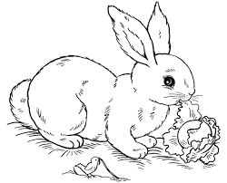 bunny coloring pages getcoloringpages
