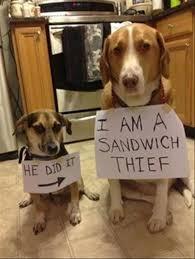 Dog Shaming Meme - dog shaming meme sandwhich thief dump a day