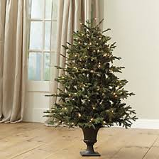 4 foot spruce tree