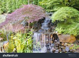 backyard waterfall pond japanese maple trees stock photo 108118172