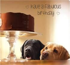 Happy Birthday Meme Dog - best 25 happy birthday dog meme ideas on pinterest birthday