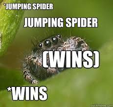 Spider Meme Misunderstood Spider Meme - jumping spider wins jumping spider wins misunderstood spider